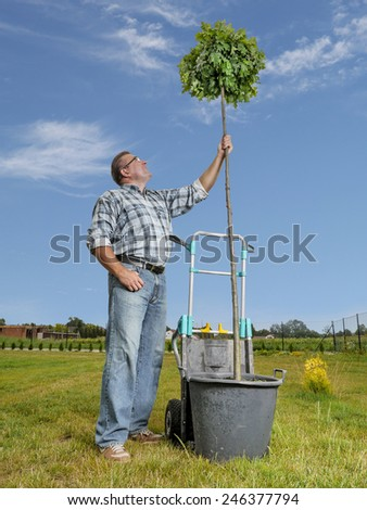 Young man looking upwards at the oak tree ready for planting in the ground  - stock photo