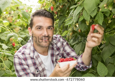 Young man picking up raspberries