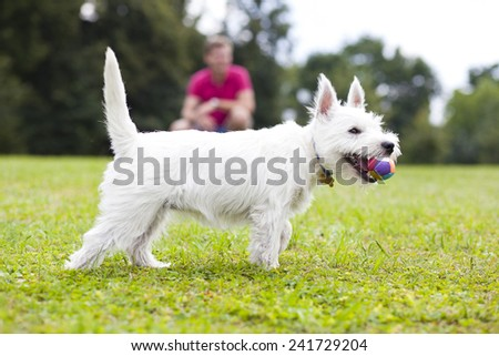 Young man playing with his dog in the summer park - stock photo