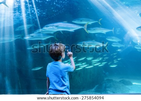 Young man pointing fish in a tank with his finger at the aquarium - stock photo