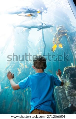 Young man touching a illuminate fish-tank behind the camera at the aquarium - stock photo