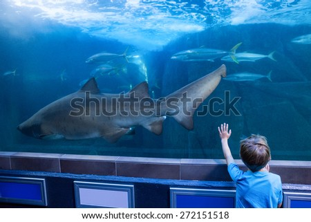 Young man touching a tank with fish and shark at the aquarium - stock photo
