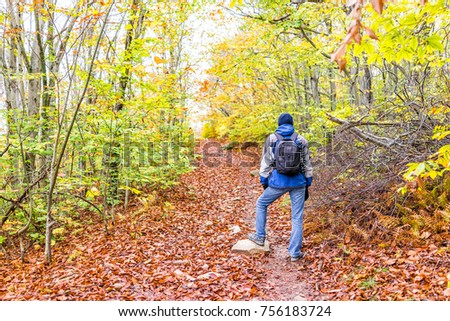 Young man walking on hiking trail through colorful orange foliage fall autumn forest with many fallen dry leaves on path in West Virginia