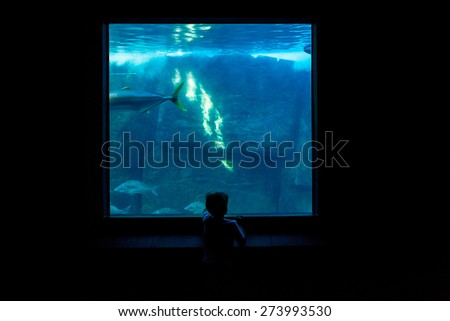 Young man watching fish in a darkest room behind the camera at the aquarium