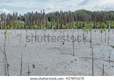 Young mangrove trees reservation in sea salt water. - stock photo