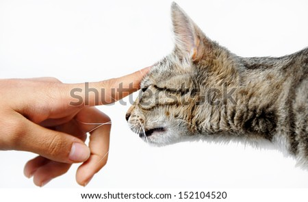 Young mixed-bread cat human hand