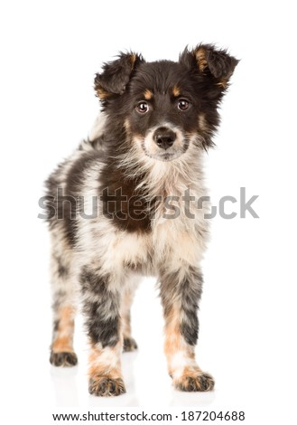 young mixed breed dog in full height. isolated on white background - stock photo