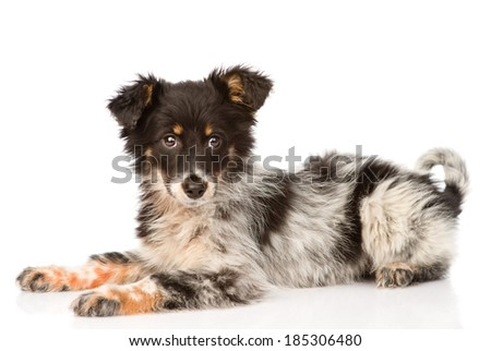 young mixed breed dog. isolated on white background - stock photo