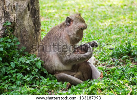 Young monkey sucking nipples mom