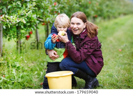 Young mother and her little son eating red apples in an orchard garden - stock photo