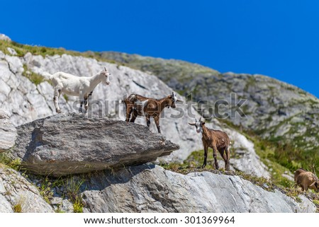 Young mountain goats climbing on the cliff - stock photo