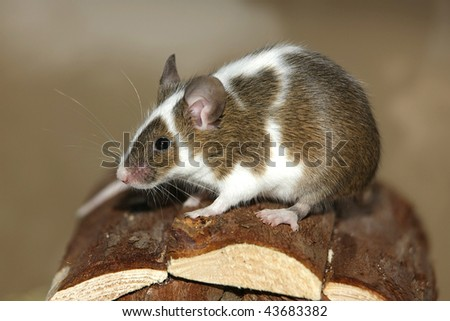 Young mouse sitting on the roof of his wooden hut
