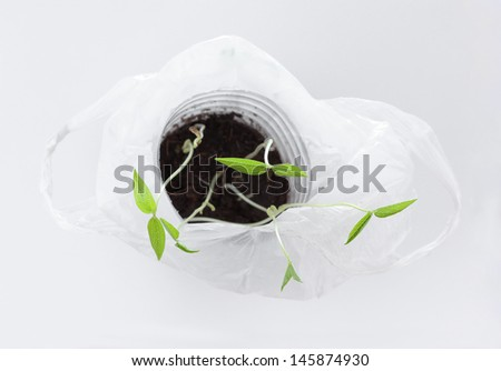 Young mung bean sprouts in white plastic bag, Top view - stock photo