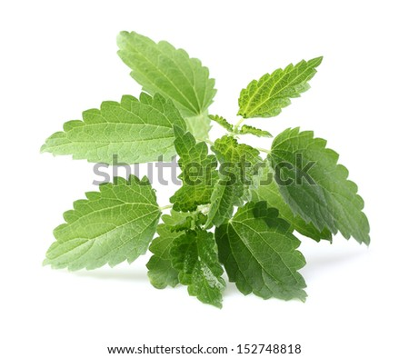 Young nettle - stock photo