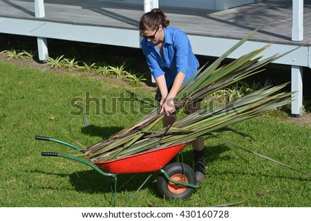 Young New Zealander woman collect flax leaves into a wheelbarrow. - stock photo