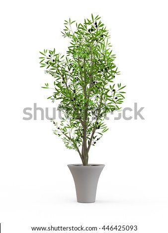 Young olive tree in stylish ceramic pot isolated on white background. 3D Rendering, 3D Illustration.