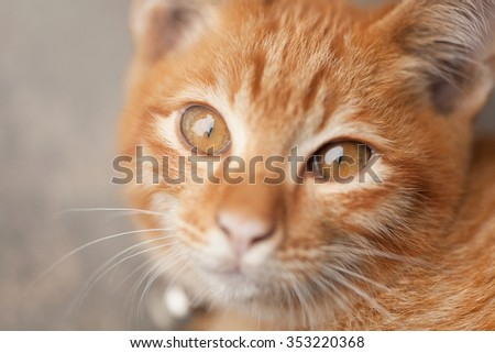 Young orange cat - stock photo