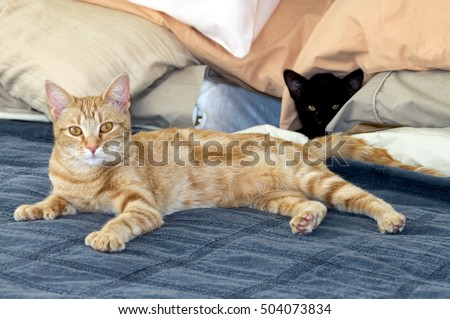 Young orange tabby cat and black kitten on bed looking at camera