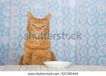 Curtains Ideas cat curtains kitchen : Cat Kitchen Table Stock Photos, Royalty-Free Images & Vectors ...