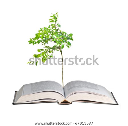 Young orange tree growing from book