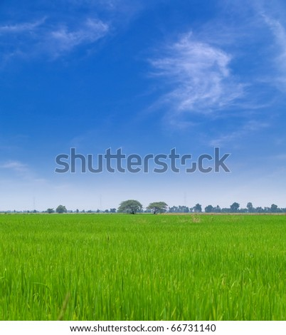 Young paddy field with beautiful blue sky - stock photo