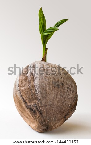 Young palm tree on white&gray background