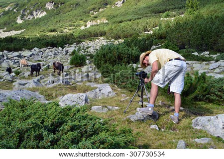 Young Photographer Shooting A Herd Of Cows In The Wild
