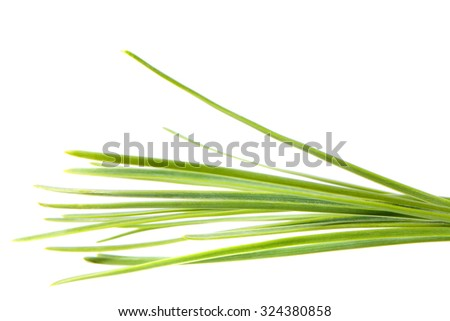 Young pine branch detail isolated on white background, a macro studio shoot  - stock photo