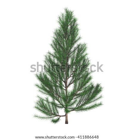 Young pine tree (Pinus sylvestris) isolated on white background. Christmas tree. Spruce tree. 3D illustration.