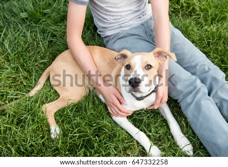 Young Pit Bull and Labrador Mix Puppy Relaxing Outside on Green Grass Next to His Human