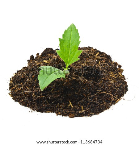Young plant and pile of soil on white background - stock photo
