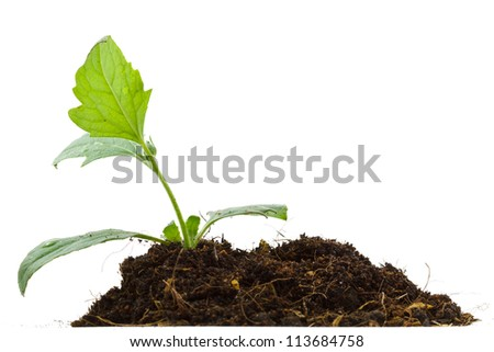 Young plant and pile of soil on white background