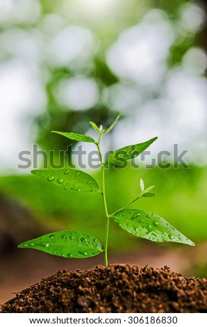 young plant grow and sunshine - stock photo