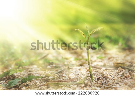young plant grow on the sand - stock photo