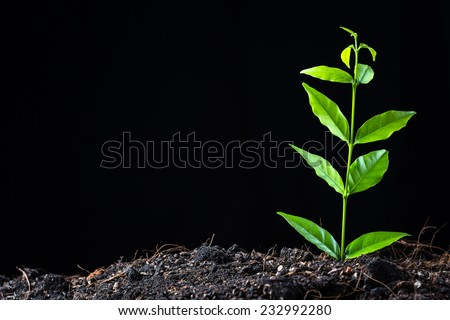 Young plant growing from soil on black background - stock photo