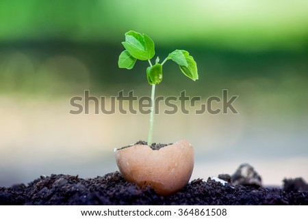 Young plant growing in egg shell - stock photo