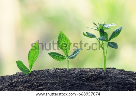 Young Plant Growing In Sunlight on nature background