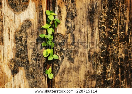 Young plant growing, new life  - stock photo