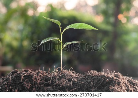 Young plant growing on brown soil with green bokeh