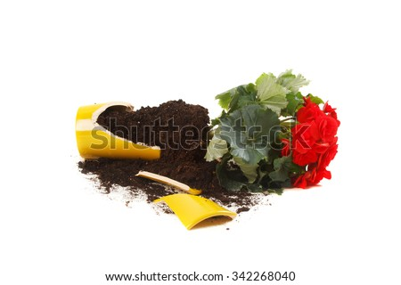 Young plant in a broken flower pot - stock photo