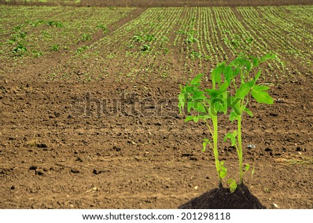Young plant in ground - stock photo