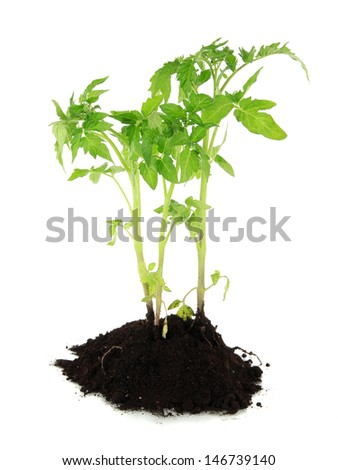 Young plant in ground isolated on white - stock photo