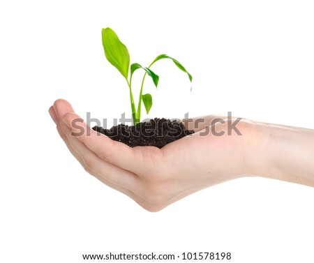 Young plant in hand isolated on white