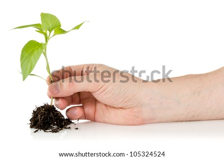 Young plant in hand over a white background