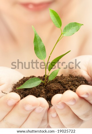 Young plant in hands of the person...