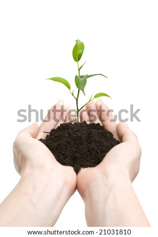 Young plant in human hands on light background - stock photo