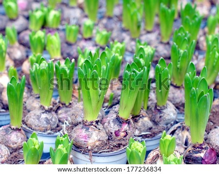 Young plant in pot for sale  - stock photo