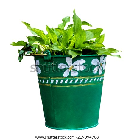 Young plant in pot isolated on the white background - stock photo