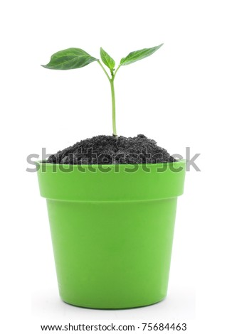 Young plant in pot isolated on the white backgrounds - stock photo