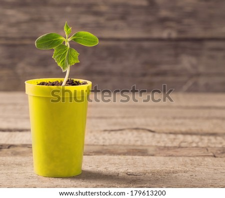 Young plant  in pot on wooden background - stock photo